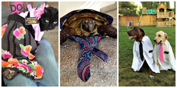 10 Pictures of Pets Dressed As Missionaries
